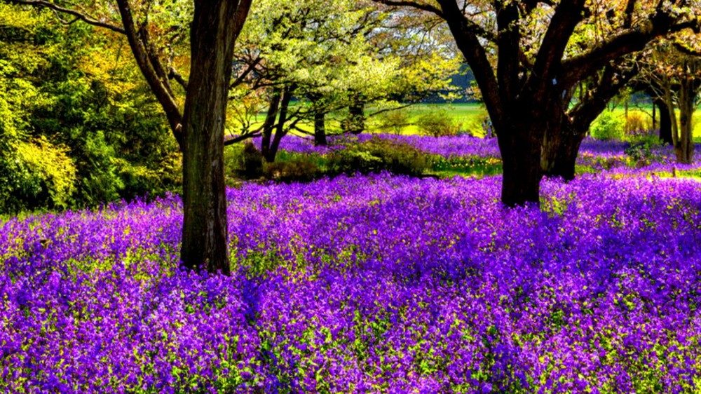 trees-flowers_00377980